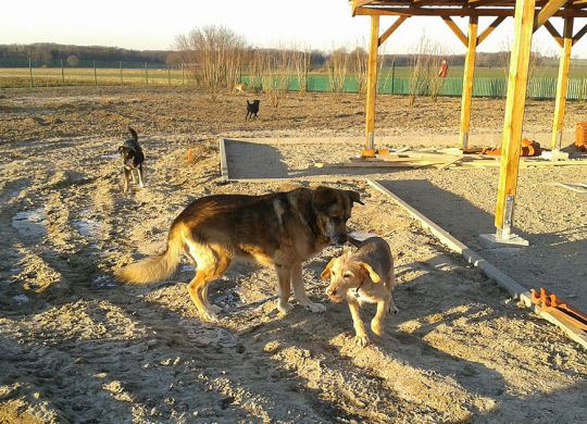 036Christiane-Schulz---Park-Hundetest-2