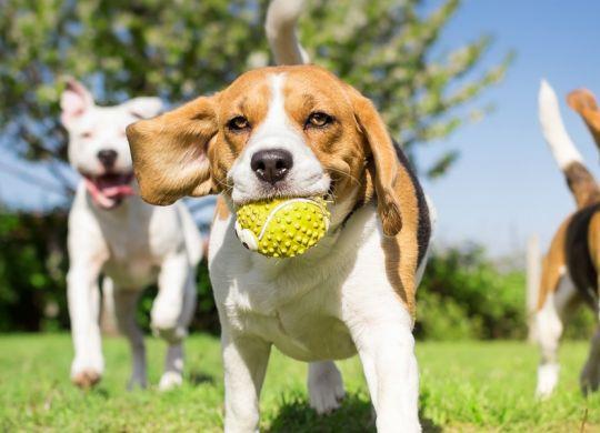 Hundetagesstätte Hannnover